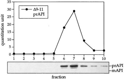 API-targeting mutants are not defective in API oligomerization. Strain DYY101 (ape1Δ) harboring a single copy plasmid encoding the propeptide deletions was grown to midlog  phase, lysed with glass beads, and separated on a 20–50% glycerol gradient. The Δ9–11 API deletion mutant shown here is a  representative example of the analysis of the cvt (1 to 17) and  propeptide deletion mutants (Δ3–5, Δ6–8, Δ9–11, Δ12–14, Δ15– 17, Δ18–20, Δ25–27, Δ28–30, Δ31–33, Δ34–36, Δ37–39, Δ40–42,  and Δ2–45). Collected fractions were subjected to Western blotting with antiserum to API and the quantitation of the Western  blots (shown in the graph) was performed as in Fig. 1.