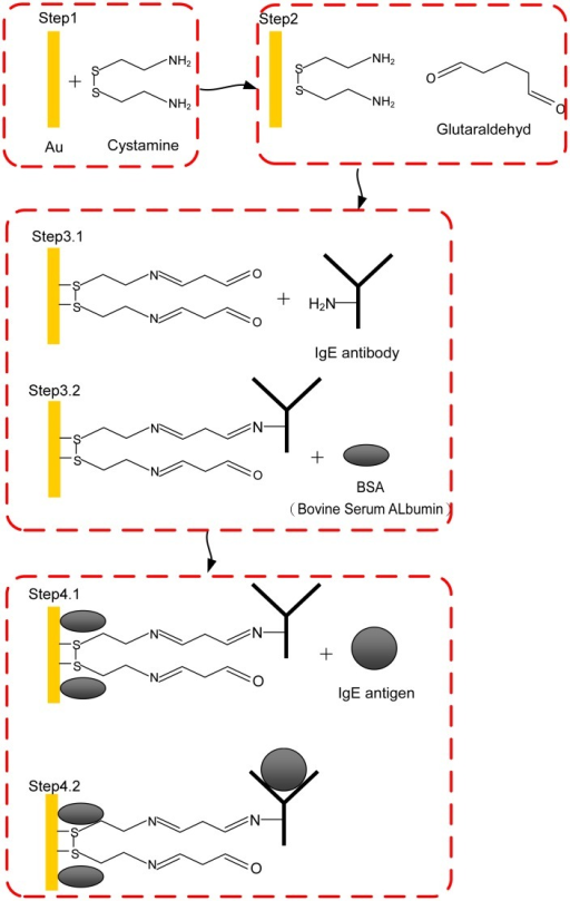 Schematic Diagram Of The Integration Of Cystamine Sam