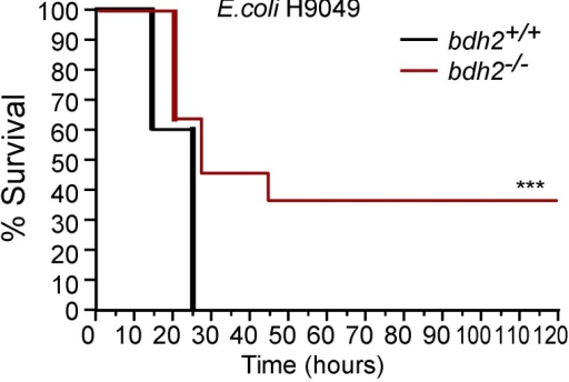 2,5-DHBA–deficient mice are resistant to E. coli infection.