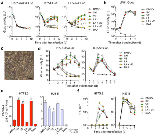 Lipid peroxidation regulates wild-type HCV replication and represses cell culture-adapted virus in primary human liver cultures. (a) Effects of SKI, VE (each 1 μM), LA (20 μM), LA + SKI, LA + VE, or a DAA (MK-0608, 10 μM) on replication of wild-type H77c/GLuc or HCV-N/GLuc RNAs, or a replication-defective control (H77c/GLuc-AAG) in Huh-7.5 cells. (b) Wild-type JFH1/GLuc RNA was electroporated and treated with drugs as in (a) with PSI-6130 (10 μM) as the DAA control. (c) Phase contrast microscopy of fetal hepatoblasts at 3 d. Scale bar, 50 μm. (d) Human fetal hepatoblasts (HFH) were infected with H77S.3/GLuc or HJ3-5/GLuc viruses in HFH media containing SKI or VE (each 1 μM), LA (50 μM), LA + VE, or a DAA, MK-0608 or PSI-6130 (each 10 μM) and assayed for GLuc. Results represent mean ± s.e.m. from three replicate cultures with cells from two donors. (e) HFH were infected with H77S.3 or HJ3-5 (MOI = 0.01) and treated as in d. Cell-associated viral RNA was quantified by qRT-PCR at 5 d (*P < 0.05, **P < 0.01). (f) Infectious virus released from H77S.3- or HJ3-5 virus-inoculated HFH (MOI = 0.01). Virus was quantified by FFU assay. Results represent mean ± s.e.m. from three replicate cultures.