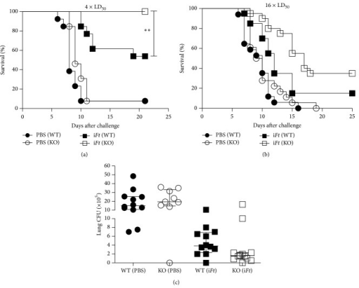 iFt-immunized FcγRIIB KO mice exhibit increased protection against a lethal Ft-LVS challenge as compared to their WT counterparts. WT C57BL/6J and FcγRIIB KO mice were immunized i.n. with 20 μL of PBS (vehicle) or 2 × 107 iFt-organisms in 20 μL of PBS on day 0 and boosted on day 21. On day 35 mice were challenged i.n. with approximately 4 × LD50 (a) or 16 × LD50 (b) of Ft-LVS. Survival was then monitored for 21 to 25 days. Panel (a) represents between 12 and 14 mice/group while panel (b) represents between 17 and 20 mice/group. Statistical analysis was determined by a contingency table analysis and two-tailed Fisher's exact test on survival at day 21. ∗∗P < 0.01. In addition, bacterial burden in the lungs of challenged mice was also determined. WT C57BL/6J and FcγRIIB KO mice were immunized i.n. with 20 μL of PBS (vehicle) or 2 × 107 iFt-organisms in 20 μL of PBS on day 0 and boosted on day 21. On day 35 mice were given a sublethal challenge i.n. with approximately 0.4 × LD50 of Ft-LVS. Five days after challenge lungs were collected, homogenized, and plated on chocolate agar to determine bacterial burden as described in Section 2. Each symbol represents a single mouse. Statistical analysis of the tissue bacterial burden was done via a nonparametric one-way ANOVA (Kruskal-Wallis test) coupled with a Dunn's multiple comparison after test. While there appeared to be a substantial reduction in bacterial burden in the majority of iFt-immunized FcγRIIB KO versus WT mice, the difference was not significant based on this analysis.