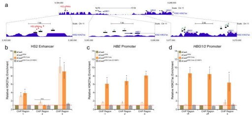 The dCas9p300 Core fusion protein acetylates chromatin at a targeted enhancer and corresponding downstream genes. (a) The region encompassing the human β-globin locus on chromosome 11 (5,304,000 – 5,268,000; GRCh37/hg19 assembly) is shown. HS2 gRNA target locations are indicated in red and ChIP-qPCR amplicon regions are depicted in black with corresponding green numbers. ENCODE/Broad Institute H3K27ac enrichment signal in K562 cells is shown for comparison. Magnified insets for the HS2 enhancer, HBE, and HBG1/2 promoter regions are displayed below. (b–d) H3K27ac ChIP-qPCR enrichment (relative to dCas9; red dotted line) at the HS2 enhancer, HBE promoter, and HBG1/2 promoters in cells co-transfected with four gRNAs targeted to the HS2 enhancer and the indicated dCas9 fusion protein. HBG ChIP amplicons 1 and 2 amplify redundant sequences at the HBG1 and HBG2 promoters (denoted by ‡). Tukey test among conditions for each ChIP-qPCR region, *P-value <0.05 (n = 3 independent experiments, error bars: s.e.m.).