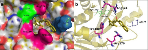 a The title compound 3 was fit well in the cavity of histone acetyltransferase enzyme. b Docking conformation of title compound 3 (generated by MOE docking software) properly accommodated into the binding cavity of histone acetyltransferase enzyme and developed hydrogen bond and two arene-cation and arene-arene interactions with active site residue Arg176, Arg124 and Trp180. histone acetyltransferase