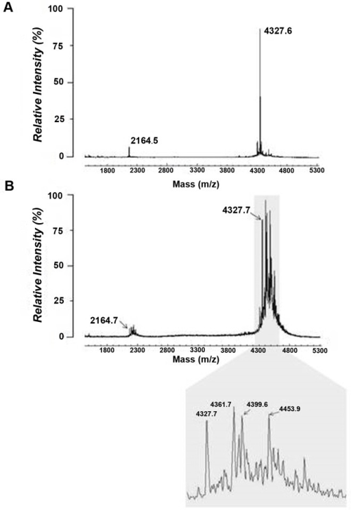 MALDI-TOF MS spectra obtained from native (untreated) rhBD-2 peptide (A) vs MGO-treated peptide (B). Native peptide exhibits singly and doubly protonated molecular ionic species at m/z 4326.6 and 2164.5, respectively. Exposure of rhBD-2 (20 ng/μl) to 100 μM MGO for 72 h resulted in additional peaks for both the singly and doubly protonated ionic species. Singly protonated ions (shaded area) show m/z increases of + 54 Da (m/z 4381.7), +72 Da (m/z 4399.7), and +126 Da (m/z 4453.7), suggesting adduction of dehydrated, intact, and dehydrated + intact MGO molecular species, respectively.