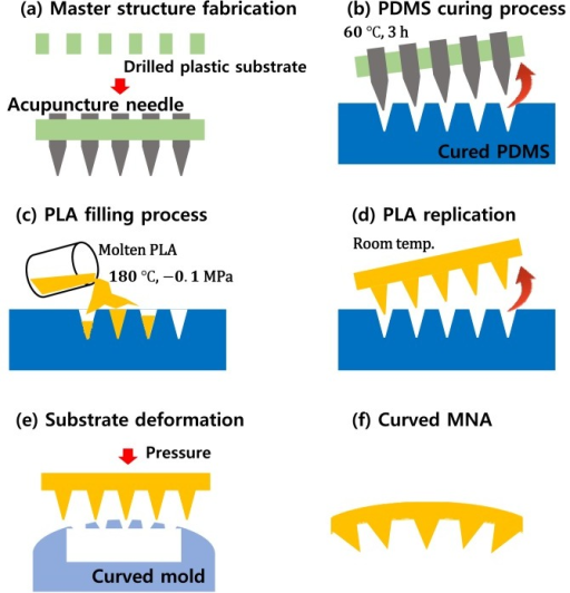Fabrication process for the microneedle array. (a) Master structure fabrication with acupuncture needles; (b) PDMS mold fabrication using the master structure; (c) molten PLA filling process in a vacuum; (d) microneedle array replication; (e) substrate deformation on the curved mold; (f) fabricated curved microneedle array.