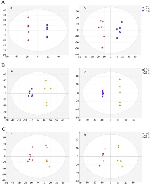 OPLS-DA score plot showed a clear separation between the infected brain samples at different time points.(A) The 7 day group and the 14 day group; (B) The 21 day group and the 14 day group; (C) The 21 day group and the 7 day group. In OPLS-DA score plot, each data point represents one mouse brain sample, and the distance between points in the plot indicates the similarity between samples. a. ESI+, b. ESI-. X axis is PC1, y axis is PC2.