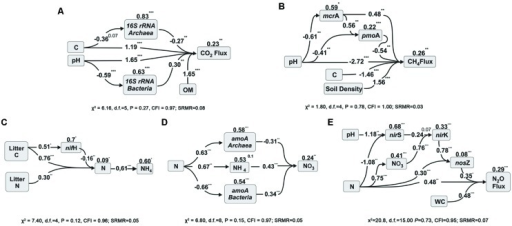 Path analysis diagrams for microbial gene abundances and CO2 fluxes (A); for methane dynamics (B); and for N-cycle related processes, NH4+ prediction (C), NO3- prediction (D) and N2O fluxes (E). The diagrams show the relationships among the selected variables and the influence of soil chemical factors in soils across land use types in Southern Amazonia in the middle of the wet season (for more information please see the Methods section). The numbers listed within arrows are standardized path coefficients (∗P < 0.05, ∗∗P < 0.01, ∗∗∗P < 0.001, or x P < x). The numbers on the top of the variable boxes represent unexplained variation (1 – R2) which represents the effect of unmeasured variables and measurement error. The litter C and N data are from Lammel et al. (2015).