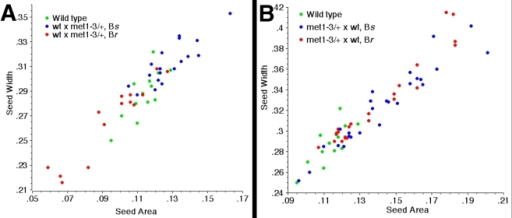 Correlation between seed size and the inheritance of met1-3 associated to BASTA resistance.(A) BASTA resistance (Br) and sensitivity (Bs) are correlated with seed size in seeds from crosses between wild-type ovules and met1-3/+ pollen. Segregation of the BASTA marker remains 1∶1 (p = 0.4795 χ2), so although some seed lethality was observed (n = 11) it is not linked to met1-3. (B) Br and Bs are not correlated with seed size in seeds from crosses between met1-3/+ ovules and wild-type pollen.