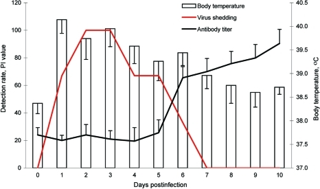 Body temperature, virus shedding, and antibody seroconversion after challenge with canine influenza virus. Body temperature was increased from 1 day postinoculation (dpi) and slowly decreased to normal temperature by 7 dpi. Virus shedding was detected from 1 dpi to 6 dpi by reverse transcription–PCR. However, the ELISA antibody titers increased after 6 dpi. Antibody titers were regarded as positive if percent inhibition (PI) was >50.