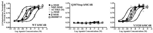 Functional Agonist Data. Illustration of the activity of α-MSH, ACTH1–24, β-MSH, γ2-MSH, and synthetic agonist JRH887–9 at the wild type MC4R, Q307X MC4R and Y332H MC4R. Agonists did not evocate any response by binding the Q307X MC4R. When the agonists were binding the Y332H MC4R the evocated response was similar to that observed for the wild type.
