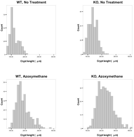 Distribution of colonic mucosal measurements in WT and KO mice. Histograms of measurements illustrate distribution of crypt length in wild type and CyCAP-/- animals.