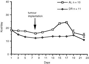 Energy intake in male C57BL6/J mice bearing the intracerebral CT-2A brain tumour. DR was initiated on day 1 and tumours were implanted on day 8. Values are expressed as means±s.e.m. and n=the number of tumour-bearing mice examined in each group.