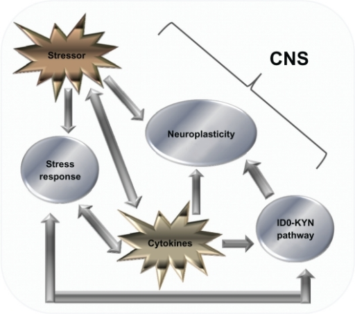 Cytokine-mediated pathways that influence the CNS. Diagram showing the various factors that influence the CNS. There is a complex relationship, the relationship with monoamines and the IDO–Kyn pathway, growth factors, and stress. Stressors and cytokines both increase the stress response, which is reflected by an increase in the amount of CRH, both in the CNS and peripherally, which in turn activates ACTH and cortisol (CORT) levels. CRH also has a bidirectional relationship with serotonin (5-HT) levels, and gamma aminobutyric acid acts as a mediator for this process. 5-HT levels are also influenced by the production of IDO, which favors the production of the neurotoxin KYN over 5-HT. The stressor system and IDO–KYN pathway both lead to a reduction in 5-HT. Cytokines also influence oxidative and apoptotic mechanisms, leading to a reduction in growth factors such as brain-derived neurotrophic factor, which in turn leads to impaired neuroplastic processes and decreased neurogenesis, as well as cytokines having an indirect effect on growth factor levels; stress has also been shown to have a direct effect. The culmination of these three pathways can lead to the development of major depression. Copyright © 2005, Elsevier. Adapted with permission from Hayley S, Poulter MO, Merali Z, Anisman H. The pathogenesis of clinical depression: stressor- and cytokine-induced alterations of neuroplasticity. Neuroscience. 2005;135(3):659–678.Abbreviation: CRH, corticotrophin-releasing hormone.