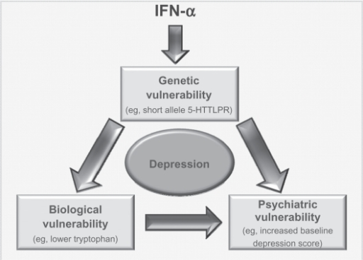 Interaction of risk factors. Model by which various risk factors could interact to possibly produce depression in those patients taking IFN-α. It is possible that administration of IFN-α could lead to some underlying genetic vulnerability (eg, the short allele in 5-HTLLPR) impacting upon levels of a chemical such as tryptophan. This vulnerability, along with the biological response it could induce, would also interact with a psychiatric vulnerability. As these people have the genetic vulnerability, they are more likely to be depressed at baseline and/or have had a history of psychiatric disorders. All this would lead the person to be vulnerable to developing depression following administration of IFN.