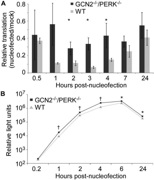 Nucleofection reduces translation in a GCN2 and PERK dependent mannerWT or GCN2−/−/PERK−/− MEF cells were nucleofected and then lysed at the indicated time. Luciferase enzymatic activity was measured as relative light units (RLU). Asterisks indicate P-value <0.05 and daggers indicate P-value <0.001 comparing GCN2−/−/PERK−/− to WT MEFs. Data is representative of 3 independent experiments. (A) Cells were transfected with pCMV-luciferase plasmid 24 hours prior to nucleofection. Luciferase activity was normalized to RLU present in non-nucleofected cells (mock) at the same timepoint. Data displayed is mean ± SEM of four replicate wells. (B) Luciferase mRNA was delivered by nucleofection. Data is mean ± SEM of three replicate wells.