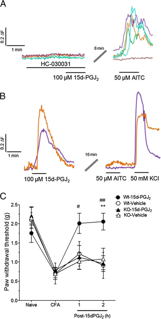 TRPA1-dependent 15d-PGJ2-mediated inhibition of AITC in vitro and mechanical hypersensivity in vivo. (A) In the presence of a specific TRPA1 antagonist, HC-030031 (100 μM), 100 μM 15d-PGJ2 did not block 50 μM AITC responses. (B) We also examined the reversibility of AITC-response inhibition in DRG neurons by 15d-PGJ2. 100 μM 15d-PGJ2 inhibited subsequent responses to 50 μM AITC for up to 16 min with continuous washout. Traces depict representative cells from 1 or more experiments in which >100 neurons were analyzed per experimental condition. (C) 15d-PGJ2 (10 μL ipl.) attenuates CFA-induced mechanical hypersensitivity in WT but not TRPA1 −/− mice. Vehicle or 15 mM 15d-PGJ2 was injected into the hindpaw of TRPA1 or WT littermates (n = 8 per group) 1 h prior to von Frey measurements. **p < 0.01 in comparing WT mice injected with 15d-PGJ2 vs. WT mice injected with vehicle. #p < 0.05, ##p < 0.01 in comparing WT mice injected with 15d-PGJ2 vs. TRPA1 KO mice injected with 15d-PGJ2. Values expressed as mean ± SEM. Data were analyzed using RMANOVA with Bonferonni post-hoc comparisons.