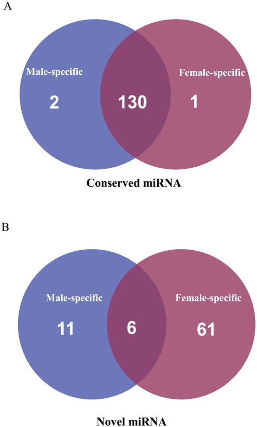 Summary of common and specific sequences between female and male libraries. (A) Conserved sRNAs and (B) Novel sRNAs.