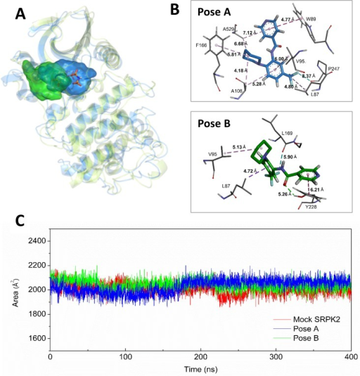 Molecular Dynamic Analysis.(A) Occupied space of SRPIN340 during simulations from poses A (blue) and B (green). Average protein structures are shown superposed in light blue for simulation A and in light green for simulation B. The ATP analogue ANP (shown in orange sticks) occupies the same region as SRPIN340 during both simulations. (B) Snapshot from pose A (upper) and pose B (bottom) simulations highlighting the possible SRPIN340 (orange sticks) interaction network. (C) Solvent accessible surface area (SASA) for tryptophan residues in the presence of the ligand, blue and green for poses A and B, respectively. The pose A simulation shows a signal increase at 175 ns, indicating a major exposure of residues to the polar solvent from this point of simulation. This is in agreement with the fluorescence spectroscopy analysis shown in Fig 6.