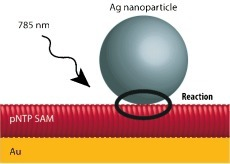 The experimental setup consists of single Ag nanoparticles deposited on a self‐assembled monolayer (SAM) of p‐nitrothiophenol (pNTP) assembled on a flat gold substrate. The Raman spectra have been measured at 785 nm excitation.