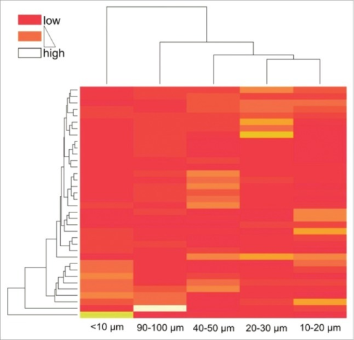 Heatmap based on unsupervised clustering encompassing randomly selected single fields from all 36 patients. Color code indicates clustering of patients according to their relative T cell densities within single distance classes.