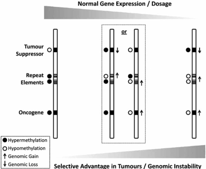 Acquisition of genetic and epigenetic changes disrupts normal gene expression and provides selective advantage to cancer cells.