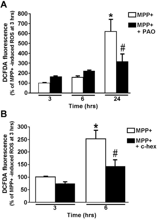 NADPH oxidase inhibitors and an inhibitor of de novo protein synthesis, cyclohexamide, attenuate ROS, but only at later time points after initiation of the MPP+ treatment. (A) N27 cells were treated with 300 μM MPP+ in the absence or presence of 10 nM PAO. Intracellular ROS levels were measured using carboxy-H2-DCFDA and flow cytometry at 3, 6, or 24 hours after initiation of the MPP+ treatment. * represents p < 0.001 compared to 3 hours MPP+ and # represents p < 0.001 compared to 24 hours MPP+. (B) N27 cells were treated with MPP+ for 3 or 6 hours in the absence or presence of the protein synthesis inhibitor cyclohexamide (c-hex). Intracellular H2O2 levels were measured as described above. Treatments are plotted as a percent of the 3-hour MPP+ treatment. * represents p < 0.001 compared to 3 hours MPP+ and # represents p < 0.05 compared to 6 hours MPP+. Data are from 3 independent experiments with n = 6 wells per experiment.