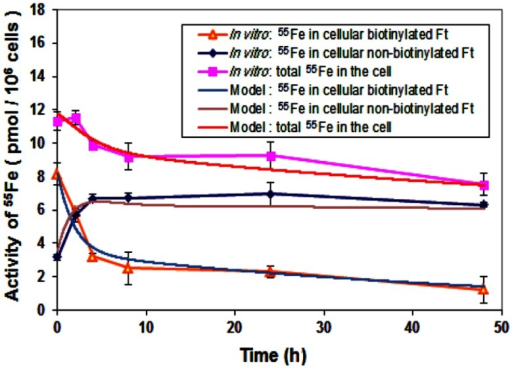 Comparison of iron storage rates between laboratory data and simulation. Cells were treated with biotinylated HFt loaded with 55Fe for various time points and the 55Fe amounts in biotinylated and non-biotinylated fractions were counted. Data shown are means and standard deviations for triplicate replication of the experiment. The experiment was performed in triplicate.