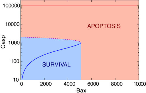 Bifurcation diagram for Casp vs. Bax. Saddle-node bifurcation point is (Baxbif, Caspbif) ≃ (5000, 1000). The unstable steady state is marked by dashed line. Solid lines show high and low stable steady states corresponding to apoptosis and survival, respectively. (Note the logarithmic scale on the vertical axis).