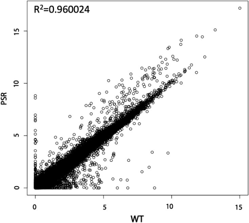 Scatter plot of PSR vs. WT testes with coefficient of determination. Scatter plot of fragments per kilobase of exon per million fragments mapped values for genes and NTRs comparing expression values for PSR (Y-axis) and WT (X-axis) testes. The coefficient of determination (R2) is displayed in top left.