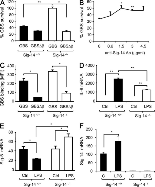 The Siglec-5/14 genotype influences human neutrophil responses to GBS. (A) Human neutrophils of the indicated genotypes were left uninfected or infected with GBS or GBSΔβ (MOI = 5), and bacterial survival at 40 min was assessed by CFU enumeration. (B) Sig-14+/+ neutrophils were pretreated with the indicated concentrations of anti–Siglec-14 antibody (Ab) for 15 min, followed by GBS infection as in A; after 40 min, bacterial survival was assayed by CFU enumeration. Data are representative of three independent experiments with one donor in each experiment. (C) Human neutrophils of the indicated genotypes were infected with FITC-labeled GBS or with GBSΔβ at 4°C, and then bacterial binding to neutrophils at the 20-min time point was analyzed by FACS. The graph depicts MFI of GFP fluorescence on neutrophils. (D–F) Human neutrophils of the indicated genotypes were left unstimulated or stimulated with LPS, and IL-8 (D), Siglec-5 (E), and Siglec-14 (F) mRNA were analyzed by Q-RT-PCR at 2 h. Results were normalized to the amount of GAPDH mRNA. Data in this figure are representative of two to four independent experiments with one to three different donors per genotype in each experiment. Results are means ± SD; *, P < 0.05, **, P < 0.01.