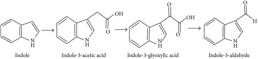Proposed pathway of indole transformation for Arthrobacter sp. SPG.