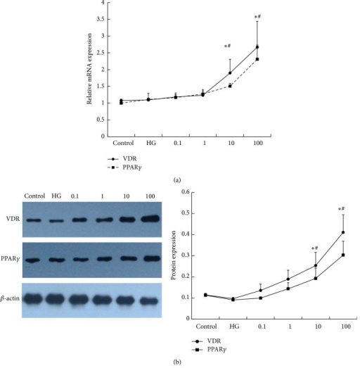 The effect of 1,25(OH)2D3 on the expression of VDR and PPARγ. RAW264.7 cells were stimulated with 1,25(OH)2D3 in a dose- (0.1 nM, 1 nM, 10 nM, and 100 nM) dependent manner. After 24 h, the cells were collected for (a) RT-PCR and (b) western blotting analysis. β-actin was used as an internal control. A concentration of 11.1 mM glucose was used as a control. HG: 25 mM glucose. Data are presented as the mean ± SD (n = 3-4 per group). *P < 0.05 versus control; #P < 0.05 versus HG.