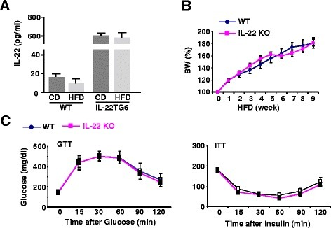 Endogenous IL-22 does not play a role in the development of obesity and insulin resistance induced by a HFD. a Two-month old IL-22TG6 mice and their littermate controls were fed a HFD or CD for 10 weeks. Serum IL-22 levels were measured. b, c Two-month old IL-22KO mice and their littermate controls were fed a HFD or CD for 10 weeks. Body weight was counted weekly (panel b); GTT and ITT were examined after 10 weeks feeding (panel c). CD; control diet; HFD: high-fat diet. Values represent the mean ± SEM (n = 6-12)