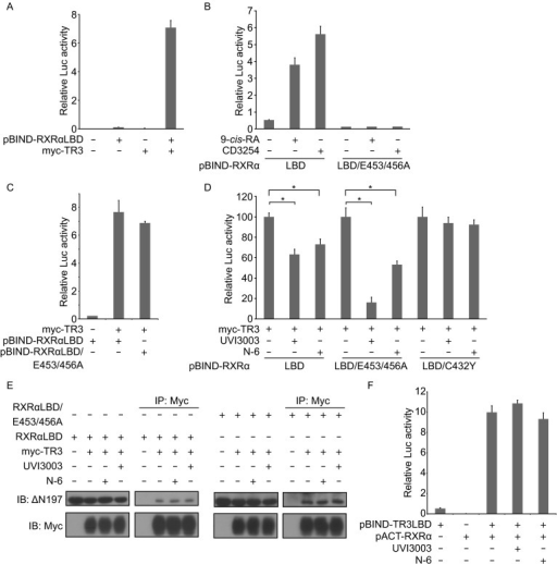 N-6 inhibits TR3 transcriptional activity by binding to RXRα. (A–D, and F) MCF-7 cells cotransfected with pG5-Gaussia-Dura reporter vector and the indicated expression vectors were treated with or without N-6 (10 μmol/L), UVI3003 (1 μmol/L), and 9-cis-RA (10−7 mol/L) for 18 h. Reporter activities were measured and normalized. Data shown are mean ± SD (*P < 0.05). (E) HEK293T cells cotransfected with pCMV-Myc-TR3 and pBIND-RXRα-LBD expression vectors were treated with UVI3003 (1 μmol/L) or N-6 (10 μmol/L) for 18 h. Cell lysate were analyzed for heterodimerization of Nur77 and Gal4-DBD-RXRα-LBD by co-immunoprecipitation with anti-myc antibody. One of three similar experiments is shown
