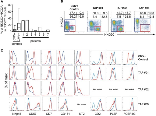 Phenotypic characterization of NKG2C+ NK cells in TAP-deficient individuals. (A) Size of the NKG2C+NKG2A− subset in PBMCs from seven TAP-deficient donors compared to CMV− and CMV+ healthy controls. (B, C) Gating strategy and phenotype of NKG2C+NKG2A− (red lines) compared to conventional CD56dim NK cells (blue lines) after gating on live CD3−CD4−CD14−CD19−CD7+CD56dim/− cells from three TAP-deficient donors compared to one healthy control.