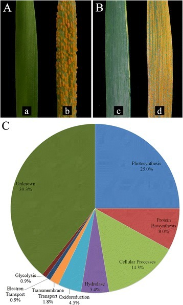 Seedling (a) and adult (b) responses to a) L693, b) L661, c) L693, d) L661. c Functional classes of differentially expressed sequences induced by Pst inoculation