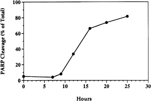 Kinetics of PARP cleavage after TNF-α treatment. MCF-7  cells were seeded at 2 × 106 cells/10-cm plate, rested overnight, and then  treated as in Fig. 1. At the indicated time points, cells were harvested by  scraping in media to insure inclusion of the floating cells at later time  points. Cell lysis and Western blotting were performed as described in  Materials and Methods. Densitometric analysis of the two resulting bands  was performed. The cleaved PARP fragment is represented as a percent  of the total of both fragments. A representative experiment is shown (out  of three).