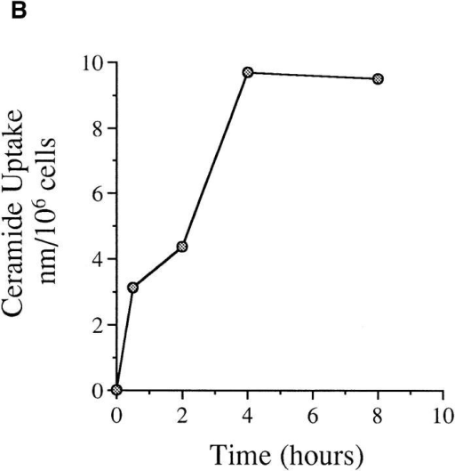 (A) Kinetics of PARP cleavage after ceramide treatment.  MCF-7 cells were seeded and treated with ceramide, and then harvested  at the indicated time points. PARP cleavage was assayed as in Fig. 2. Intact PARP (116 kD) and its cleaved product (85 kD) are indicated. (B)  Kinetics of exogenous ceramide uptake. MCF-7 cells were seeded and  treated with 14C6-ceramide (specific activity of 1.5 × 1013 cpm/mole) at a  similar concentration. At the indicated time points, cells were harvested,  washed twice with PBS, and the radioactivity retained in the pellet was  counted and presented as a percent of total radioactivity delivered. (C) Effects of CrmA and Bcl-2 on ceramide-induced PARP cleavage. Vector,  CrmA-expressing, or Bcl-2–overexpressing cells were seeded at 2.5 × 105  cells/well of a 6-well plate. The cells were rested overnight then treated  with vehicle (V) or ceramide (C) for 8 h or TNF-α (T) for 16 h. The final  concentration of ceramide was 0.32 pmole/cell, and 1.2 nM for TNF-α.  Cells from a total of six wells for each treatment were then harvested,  combined, and PARP cleavage was assayed as in Fig. 2.