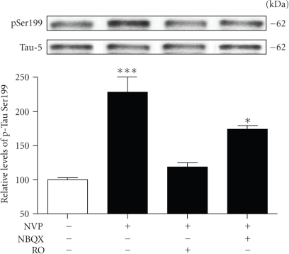 NR2B-containing receptors play a role in Tau phosphorylation induced by NVP. Phosphorylated Tau levels at Ser199 were estimated by Western blotting on cell extracts obtained from acute hippocampal slices treated with 50 nM NVP for 2 hours alone or in combination with 10 μM NBQX and 10 μM RO25-6981. The data, expressed relative to total Tau (i.e., Tau-5) levels, are means ± SEM of 3 measurements per cell extract obtained from 4 different rats. Statistical analysis was performed by one-way ANOVA followed by Neuman-Keuls' post hoc test. *P < .05, ***P < .001, drug-treated versus control.