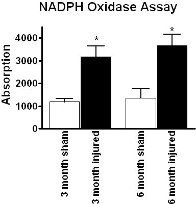 NADPH oxidase enzyme activity profile after spinal cord injury. NADPH oxidase enzyme activity was also assessed to confirm that gene and protein expression translated to enzymatic activity. NADPH oxidase activity was measured in sham and injured spinal cord tissue at 3 and 6 months post-injury. Bars represent mean +/- SEM. *p < 0.05.