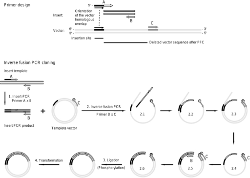 Schematic outline of inverse fusion PCR cloning (IFPC). | Open-i
