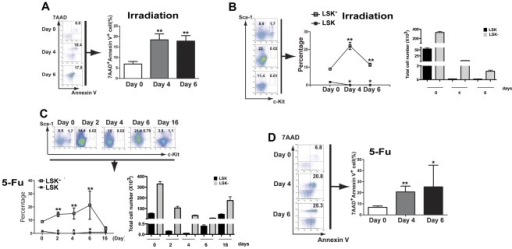 Irradiation and 5-FU treatment promote cellular transition of LSK to LSK− cells.(A) Lethal irradiation causes an increase in the percentage of apoptotic LSK− cells. Mice were treated by two split doses of 550-cGy gamma irradiation (separated by 3 hours), and the apoptotic cells (7AAD+Annexin V+) in the LSK− population were analyzed by FACS at different time points (n = 4). **: p<0.01. (B) Total number and percentages of LSK and LSK− cells in bone marrow of lethally irradiated WT mice were determined at different time points (n = 4). *: p<0.05; **: p<0.01. (C) Total number and percentages of LSK and LSK− in bone marrow of 5-FU treated WT mice at different time points. The mice were treated with 5-FU (200 mg/kg) by intravenous injection, and the percentages of LSK and LSK− cells were monitored at different time points (n = 4). *: p<0.05; **: p<0.01. (D) The apoptotic rate of LSK− cells in 5-FU treated mice. WT mice were treated with 5-FU, and apoptotic rate of LSK− cells were monitored at different time points (n = 4). *: p<0.05; **: p<0.01.