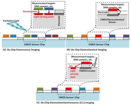 The concept of on-chip biomolecular detection using an optical (a) and an electrochemical (b) sensor combined in a dual-image CMOS sensor to detect electrochemiluminesence (c) [86]. Adapted with the permission of Elsevier.