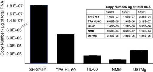 Basal levels of MOR, DOR and KOR mRNA in neuronal and immune cell lines. Basal levels (copy number) of the human MOR, DOR and KOR in the U87 MG astrocytic, HL-60 (TPA differentiated and undifferentiated), NMB, and SH-SY5Y cell lines were determined using absolute quantitative real time RT-PCR (AQ-rt-RT-PCR). GAPDH was used to normalize the levels in each cell line. Data are indicated as the mean ± SE.