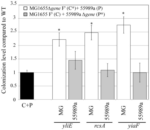 Colonization resistance genes are strain-specific.Comparison of the effect on colonization of mutations introduced into commensal MG1655 F′ (C) or into pathogenic strain 55989a (P). Results are represented as ratio of colonization of mutant mixed MG1655 F′Δgene (C*) +P or C+55989aΔgene (P*) biofilms compared to wild-type mixed C+P biofilm. Black bar represents extent of wild-type colonization in C+P mixed biofilms arbitrarily set to one. White bars represent colonization levels of CΔgene +P mixed biofilm (mutation introduced into commensal and wild-type pathogens). Light gray bars represent colonization levels of C+PΔgene mixed biofilm formed by wild-type commensal and mutant pathogens. Names of deleted genes are indicated under the line. Results are averages of at least 6 replicates ± standard deviation of the mean. Asterisks indicate mutant mixed biofilm with a colonization level significantly different from that of wild-type MG1655 F′ + 55989a mixed C+P biofilm, P<0.05.