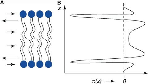 Lateral pressure profile for a lipid bilayer (left), with surface tension being balanced by steric repulsion between the head-groups and acyl chains. See text for details. Adapted from [51].