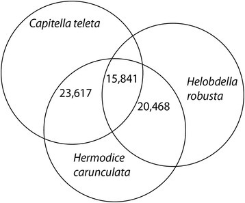 Venn diagram distribution of similarity search results for Hermodice carunculata. Based on 58,454 predicted Open Reading Frames (ORFs) of genes longer than 200 amino acids. The number of unique sequence-based annotation is the best sum of unique BlastP hits (E-value of 2e−15) from Capitella teleta and Helobdella robusta proteome, respectively.