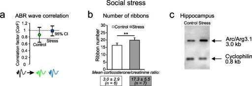 Stress priming affects ABR waveforms and IHC ribbon numbers. a Averaged ABR wave functions before and 2 days after stress priming. Waveforms of stressed animals did not significantly differ from ABR waveforms of control animals, as indicated by a similar CorF but variability was smaller. b Number of IHC ribbons was significantly increased by 22 % in stressed animals. c Northern blot analysis for Arc/Arg3.1 mRNA shows that stress priming alone increased Arc/Arg3.1 mRNA levels in the hippocampus. The housekeeping gene cyclophilin was used as a loading control (for further details, see Singer et al. 2013)