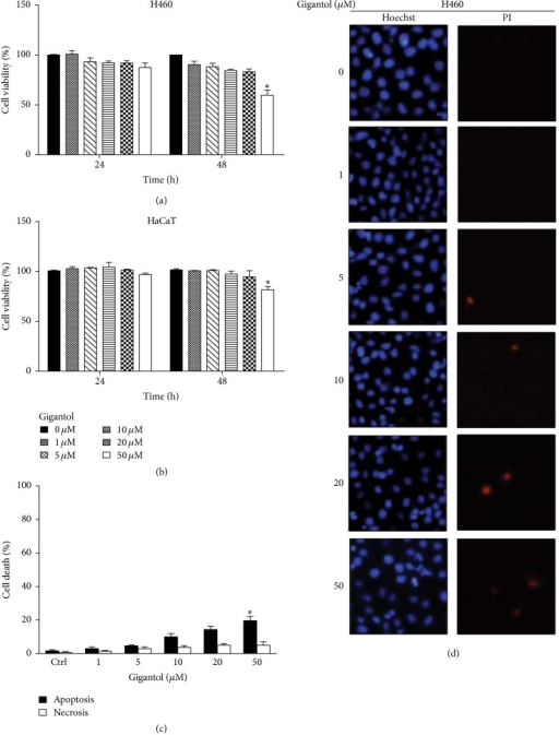 Cytotoxic effect of gigantol on human lung cancer H460 cells. (a) H460 cells and (b) HaCaT cells were treated with various concentrations of gigantol (0–50 µM) for 24 and 48 h. Cell viability was determined by a 3-(4,5-dimethylthiazol-2-yl)-2,5-diphenyltetrazolium bromide (MTT) assay. The viability of untreated cells was represented as 100%. ((c) and (d)) H460 cells were treated with gigantol (0–50 µM) for 48 h. Apoptotic and necrotic cell death were evaluated using Hoechst 33342/PI staining and calculated as a percentage compared with nontreated control cells. All plots are means ± SD (n = 3). ∗P < 0.05 versus nontreated cells.