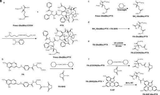 Synthetic scheme and structures of FA-FITC-Arg-PTX (A) and FA-5AF-Glu-PTX (B).Notes: (A) a, Fmoc-Arg(Pbf)-PTX; b, FA-NHS; c, NH2- Arg(Pbf)-PTX; d, FA- Arg(Pbf)-PTX; e, FA- (NH2)Arg-PTX; f, FA-FITC-Arg-PTX. (B) a, Fmoc-Glu(tBu)-PTX; b, FA-NHS; c, NH2-Glu(tBu)-PTX; d, FA- Glu(tBu)-PTX; e, FA-(COOH) Glu-PTX; f, FA-5AF-Glu-PTX.Abbreviations: 5AF, 5-aminofluorescein; FA, folic acid; FITC, fluorescein isothiocyanate; PTX, paclitaxel; h, hour; min, minute; RT, room temperature.